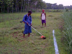 Memanfaatkan Mesin Potong Rumput Untuk Pemenuhan Kebutuhan Pakan Hijauan Kambing dan Domba